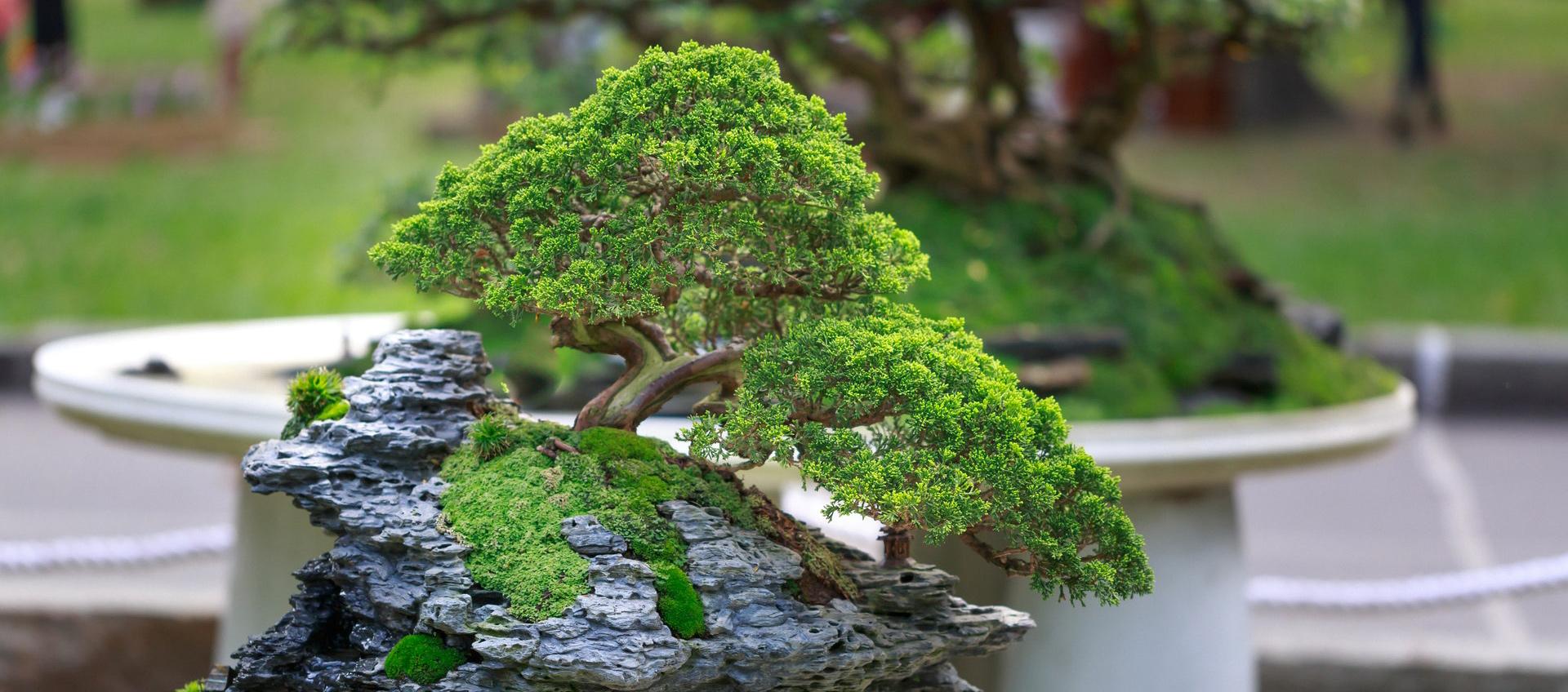 green-bonzai-tree-on-table-2149105